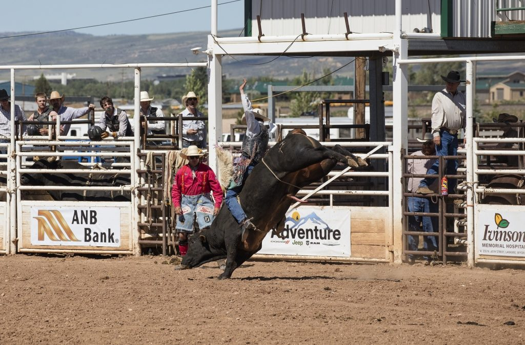 A bull rider at a local rodeo