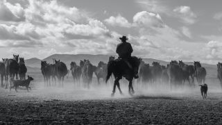 Ranching in a Time of Pandemic